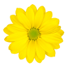 Wami - Flower